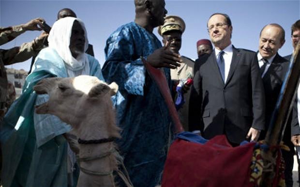 Le dromadaire de Hollande