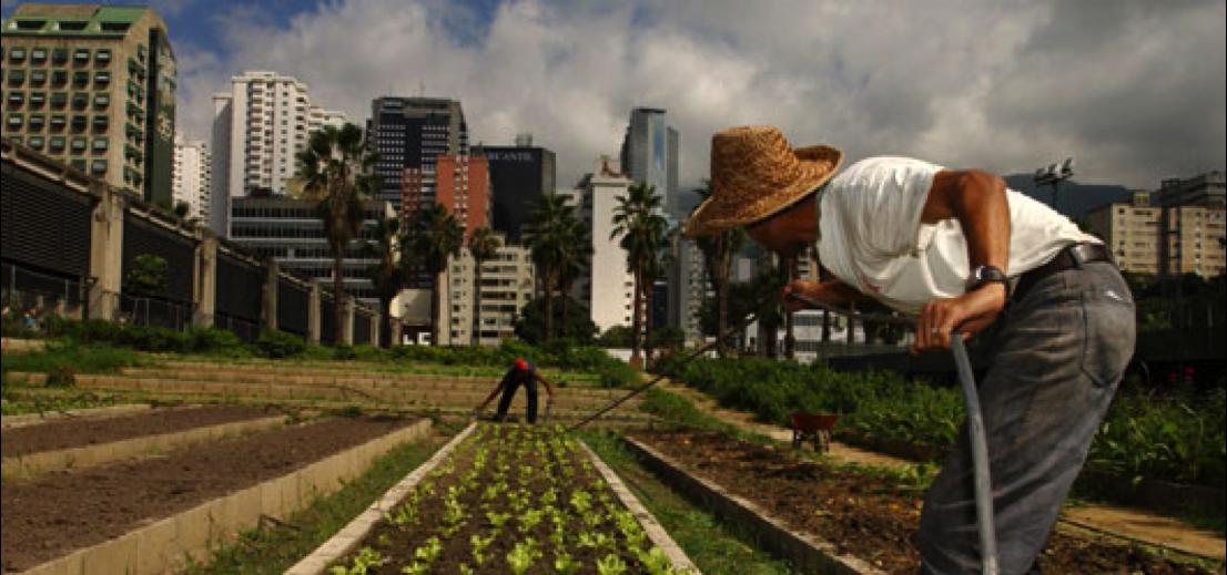 L'agriculture urbaine face au défi de la sécurité alimentaire