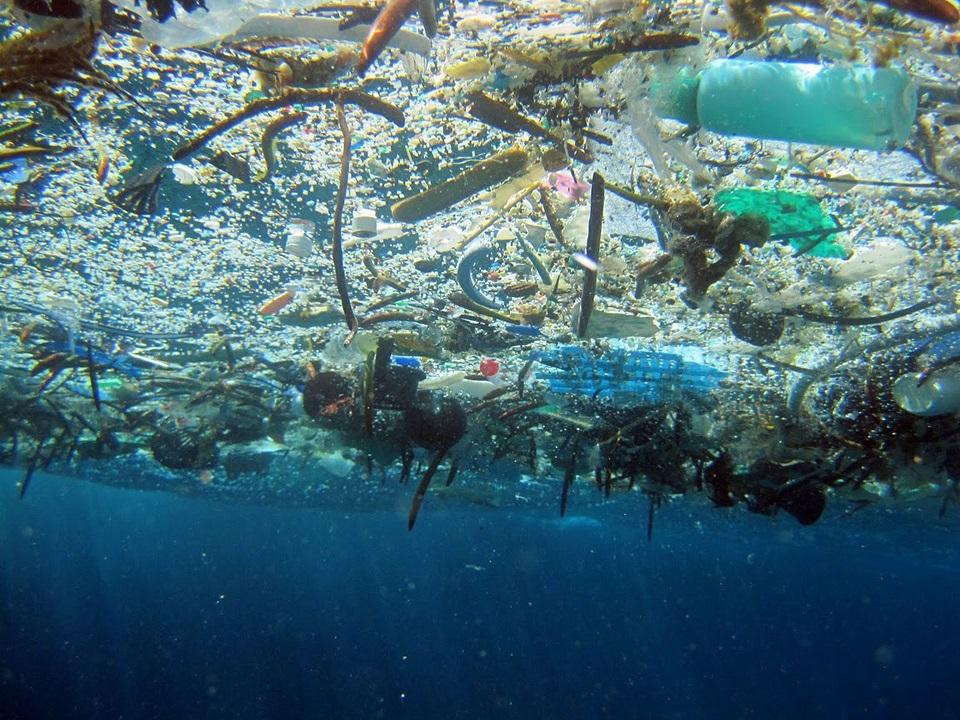Les Expéditions 7e continent: stratégies et enjeux écologiques des océans