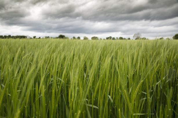 Assurer sa sécurité alimentaire, une urgence face au changement climatique