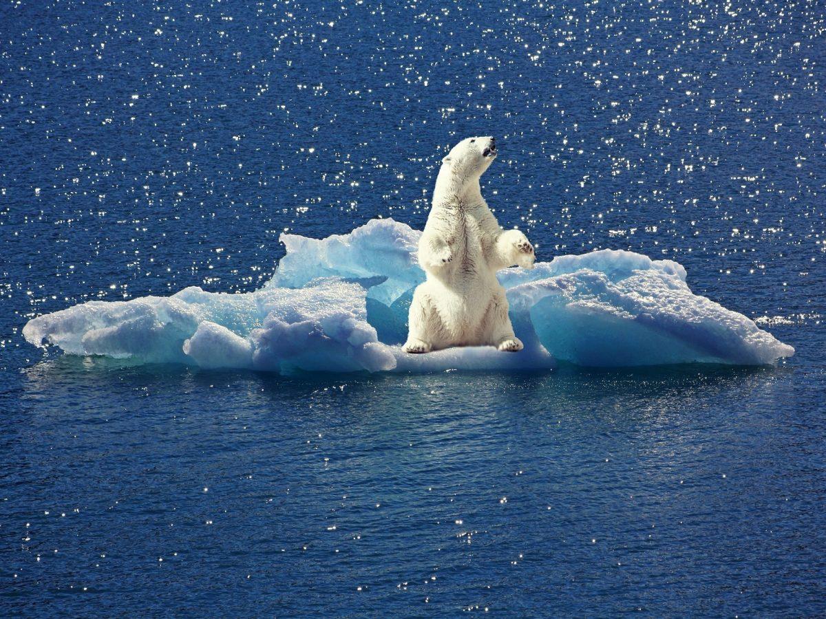 Environnement : le débat du siècle